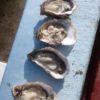 huîtres apéros